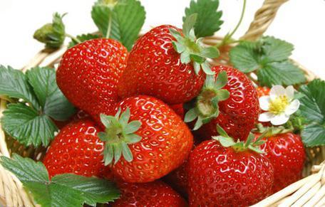 枝农奶油草莓